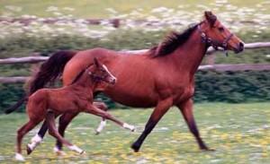Tipos comida para caballos