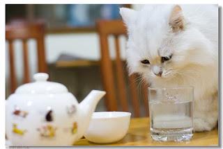 comidas para gatos caseras