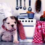 Alimentos permitidos perros